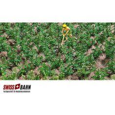 Busch 1266 Kartoffelpflanzen Feld mit 30 Pflanzen H0
